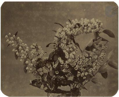 Adolphe Braun (1812-1877) Études de fleurs,...