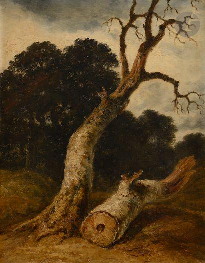 Georges MICHEL (Paris 1763 - 1843) Troncs d'arbres Toile 62x48cm Inscription...