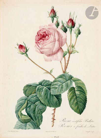 Pierre-Joseph Redouté (1759-1840) (d'après)...