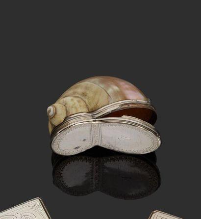 PARIS 1766-1767 Coquillage (turbo marmoratus)...