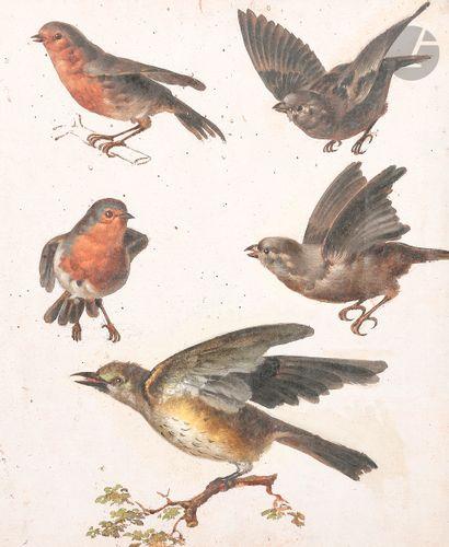 ÉCOLE FRANÇAISE du XVIIIe siècle  Cinq études d'oiseaux sur la même feuille  Huile...