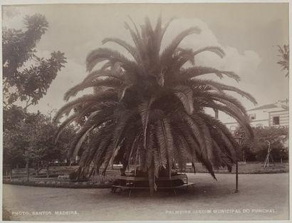 Photo Santos Madère, c. 1885. Palmerais....