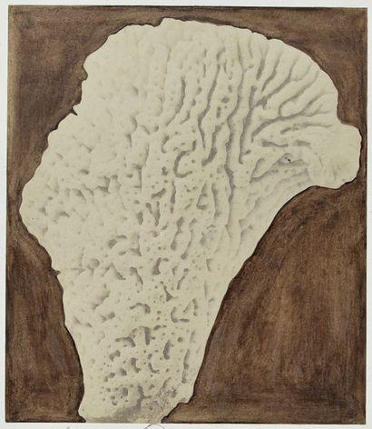 Louis Rousseau (1811-1874) Classe des spongiaires....