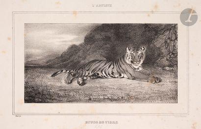 Antoine-Louis Barye (1795-1875) Étude de tigre. 1832. Lithographie. 165x84. Delteil...