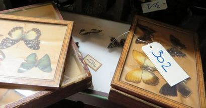 Collection de papillons sous emboîtages.