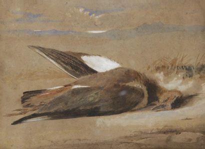 Newton FIELDING (1799 -1856) Un vanneau huppé Aquarelle. Datée en bas à droite march...