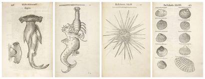 ALDROVANDI (Ulisse) De Piscibus Libri V et de Cetis lib. unus. Bologne: Nicolò Tebaldini,...