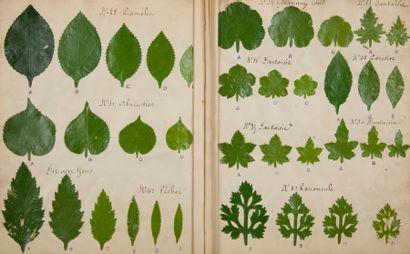 [PAPETERIE]. [Herbier factice de feuilles...