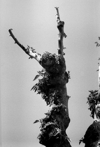 Alix de MONTAIGU (Née en 1942)