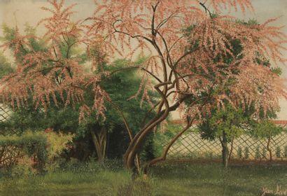 Jean EVE (1900-1968) Le Tamaris rose,1937...