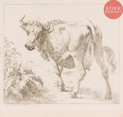 Sujets animaliers (bovins, chevaux, ovins,...