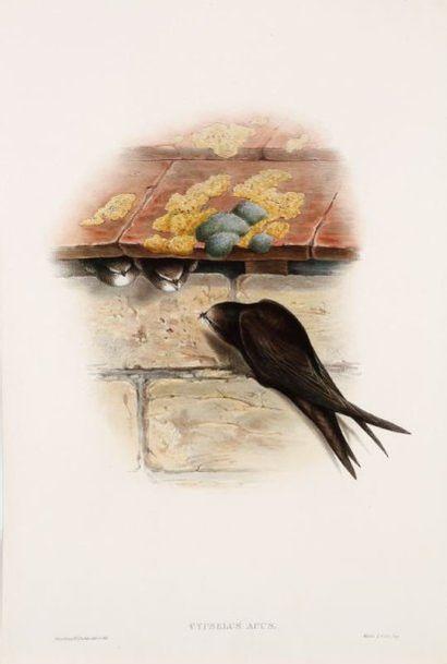 [Oiseaux ; papillons ; animaux]. Un fort lot de sujets divers, notamment d'oiseaux...