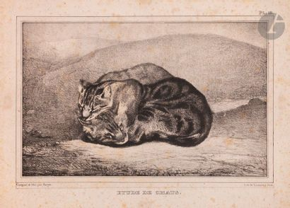 Antoine-Louis Barye (1795-1875) Étude de chats. 1836. Lithographie. 222 x 155. Delteil...