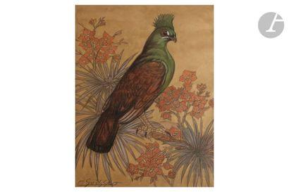 GASTON SUISSE (1896-1988) Touraco vert Pastel...