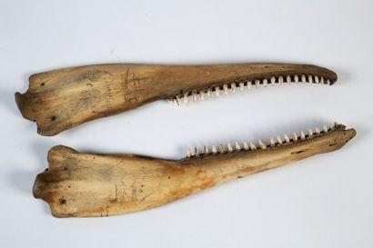 MACHOIRE de dauphin (deux pièces) gravée...