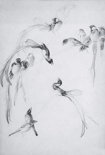 Xavier de PORET (1894-1975) « Etude d'oiseaux...