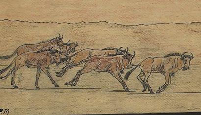 La course de phacochères et d'écureuils et...