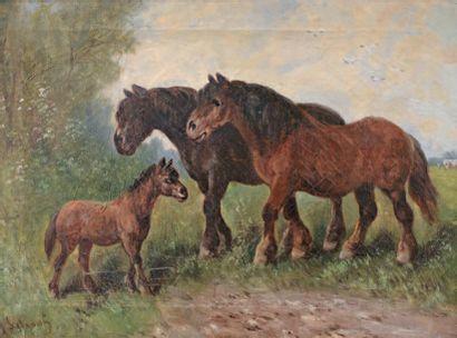 SCHOUTEN Henry (1864-1927)