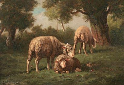 JACQUE Charles (1813-1894) « Moutons au pâturage » Huile sur toile. Signée en bas...