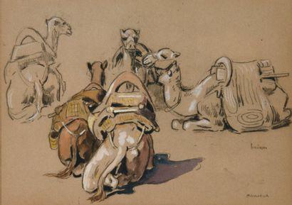 Cinq dromadaires, Marrakech. Crayon, gouache...