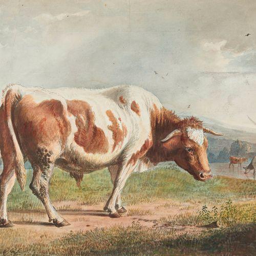 Jean Daniel Huber (1754 1845)  Vache, mine de plomb sur papier, 36,5x53,5 cm