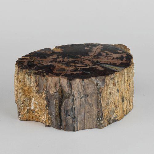 Tronc d'arbre pétrifié  5x18x13 cm