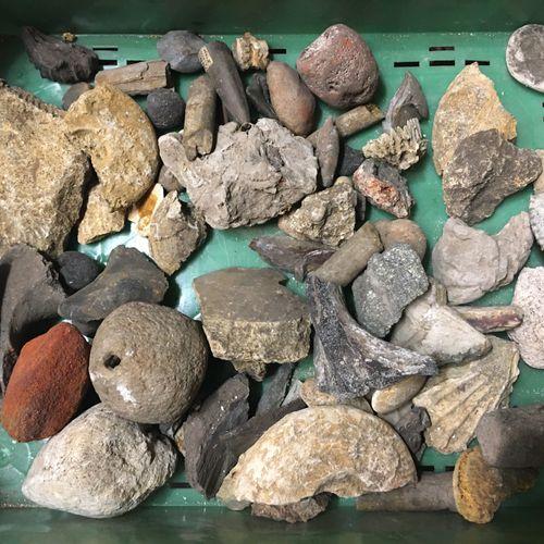 """Un lot de fossiles de plus de 30 spécimens dont :  un percuteur """"ferme de Montje…"""