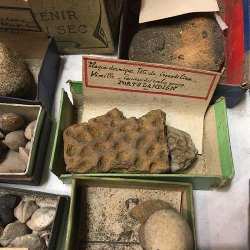 Un lot de fossiles en petites boîtes cartonnées (environ 50) avec étiquettes et …