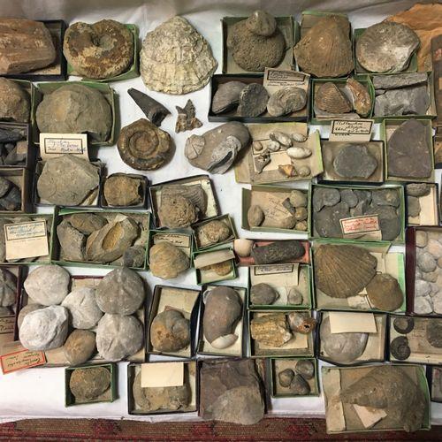 Un lot de plus de 80 fossiles dont différents fragments de fossiles en petites b…