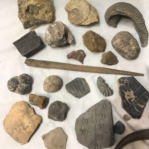 Un lot de fossiles de plus de 30 spécimens dont : morceaux de silex, micraster, …