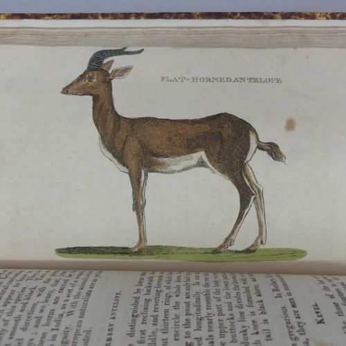 [HISTOIRE NATURELLE]. THE NATURAL HISTORY OF QUADRUPEDS, and cetaceous animals, …