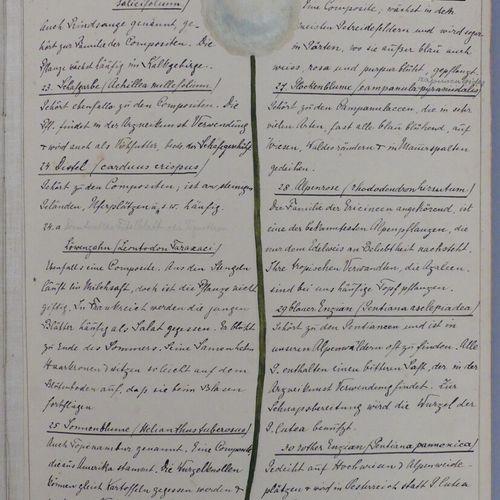[ART NOUVEAU]. MANUSCRIT DE BOTANIQUE. Petit in folio reliure toile, grande plan…