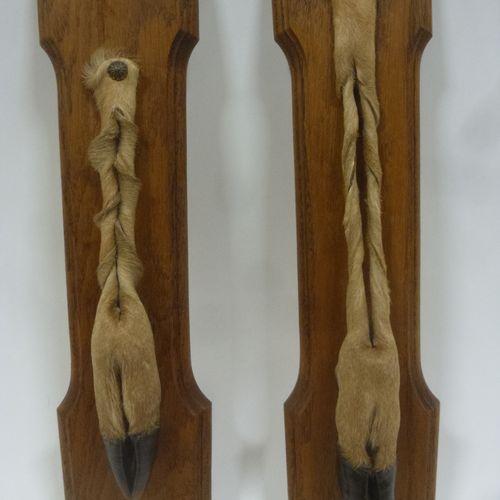 Cerf élaphe (Cervus elaphus) (CH) : 2 pieds d'honneur montés sur plaque en bois