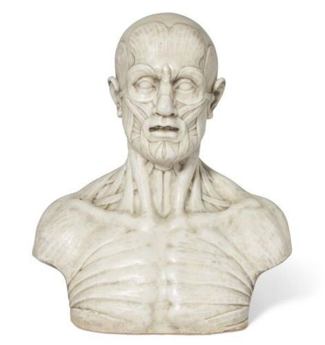 ■ WHITE MARBLE SHELL BUST LATE 19th CENTURY, AFTER THE MODEL OF JEAN ANTOINE HOU…