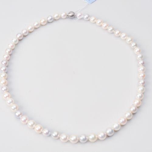 Kulturperlen Collier Acier inoxydable. 55 perles Akoya blanc rose et gris nature…