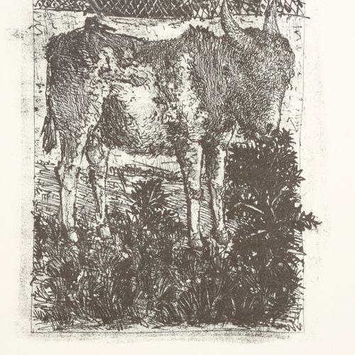 Picasso, Pablo Eaux fortes originales pour des textes de Buffon  4°, en feuilles…