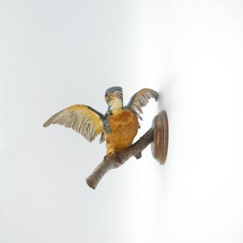 Martin pêcheur (Alcedinidae Alcedo Athhis) naturalisé sur socle Spécimen antéri…