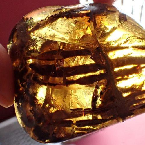 Histoire naturelle : Un spécimen ambré contenant les restes d'une plante crétacé…