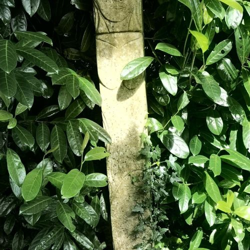 Modern and Garden Sculpture: Gerald Moore Henge with incised decoration Carved w…