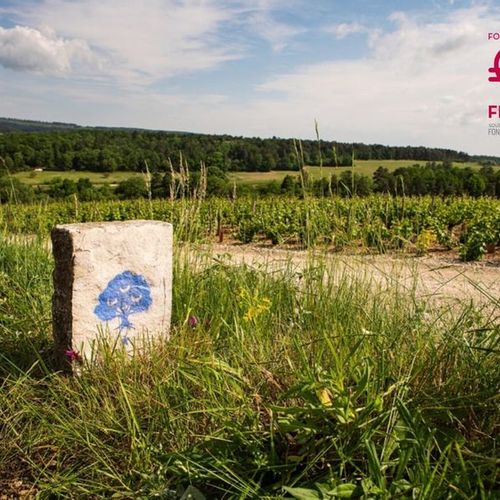 Journée découverte du vignoble Taisne Riocour et Magnum la Grande Réserve Champa…
