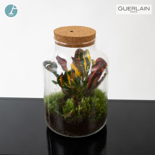 En provenance de l'ancien siège de GUERLAIN Terrarium en verre, avec couvercle é…