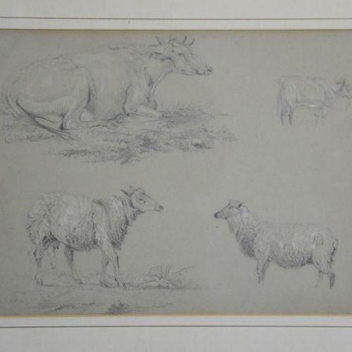 Un croquis du 19ème siècle, moutons et bétail, non signé, 21 par 26cm.