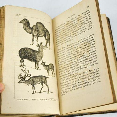 Natural History of Animals, illustré de gravures, le frontispice étant coloré à …