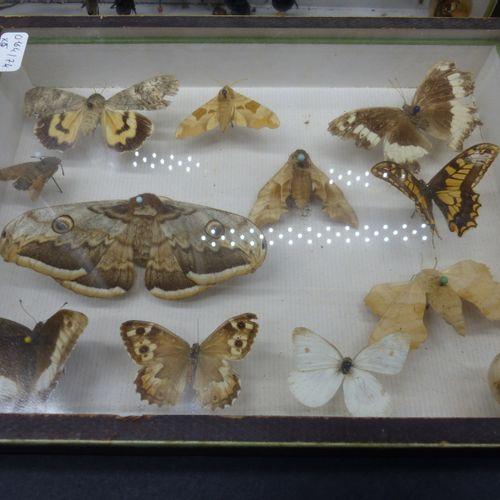 Réunion de six boîtes cadre entomologiques Réunion de cinq boîtes cadre entomolo…