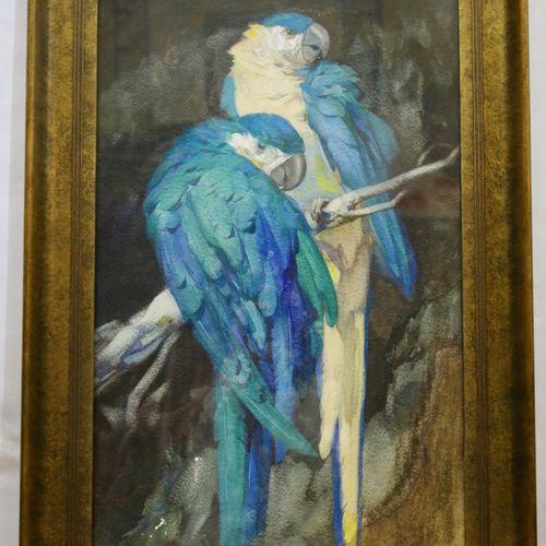 Adriaan van 't Hoff (1893 1939) Adriaan van 't Hoff (1893 1939), Papegaaien op e…