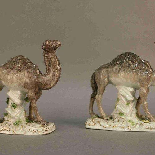 Deux SUJETS en porcelaine de Saxe polychrome représentant des chameaux.  Allema…