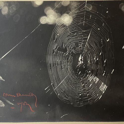 Antoine Demilly (1892 1964) Studio Blanc et Demilly The spider web, Lyon, vers 1…