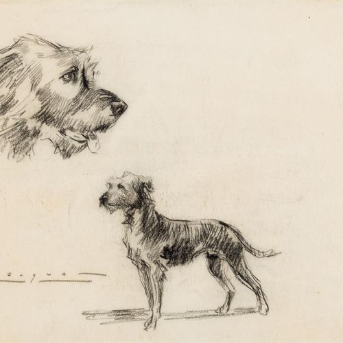 CARLOS BÉCQUER DOMÍNGUEZ (Barcelona, 1889 – 1968) Estudio canino Disegno a carbo…