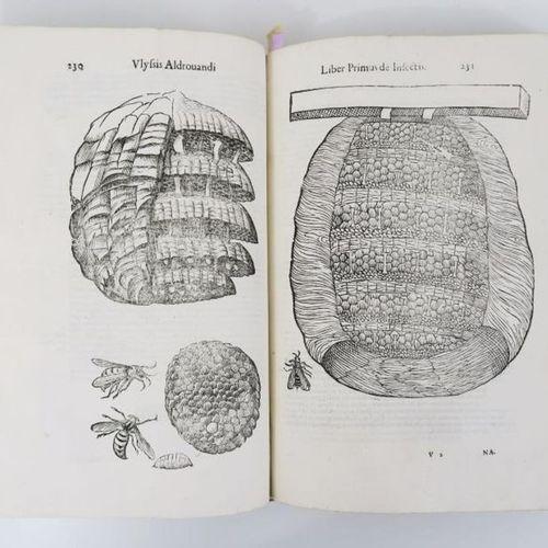 ALDROVANDI (Ulisse). De Animalibus Insectis Libri Septem; Cum Singulorvm Iconib…