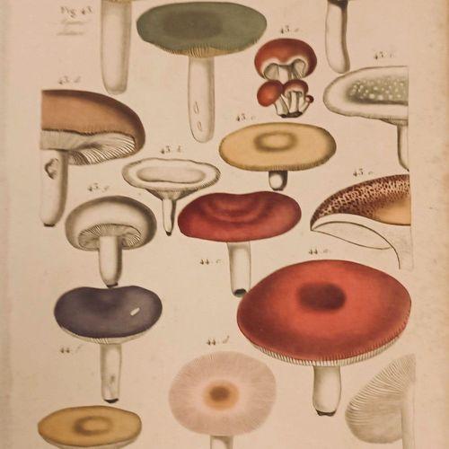 BRIERRE de BOISMONT (Alexandre) & POTTIER (André). Eléments de Botanique ou Hist…
